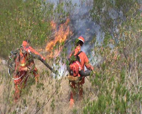 这也极易引发森林火灾;再加上清明节马上就要到来,野外祭祀,农副业